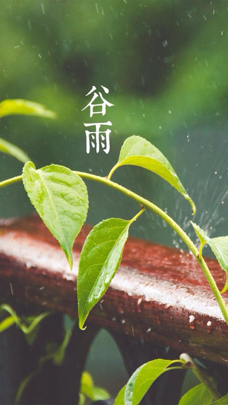 谷雨节气H5素材背景