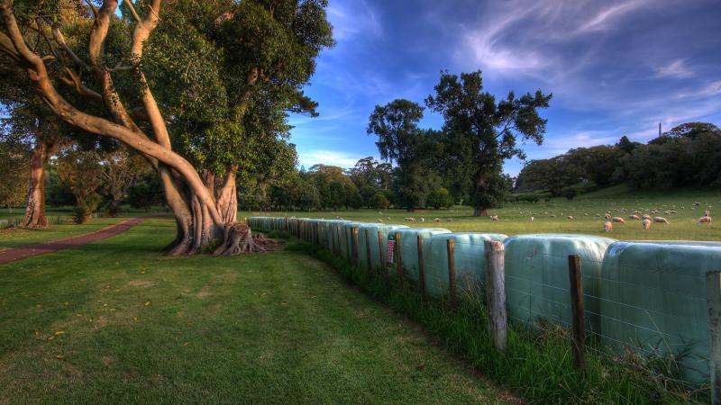 林间的河流
