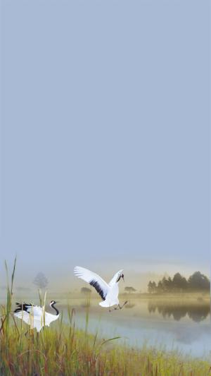 芦苇白鹤蓝色风景商业H5背景