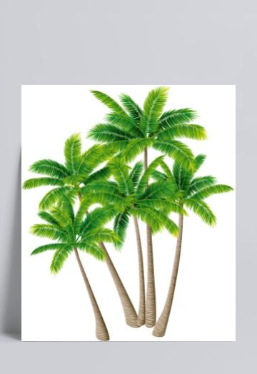 椰子树v文本文本素材c模板绘制框图片