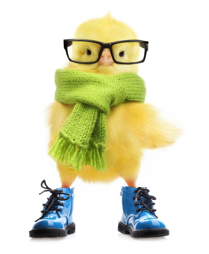戴眼镜的小黄鸭